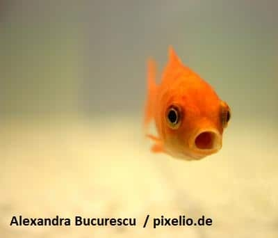 Fisch des Monats August 2020